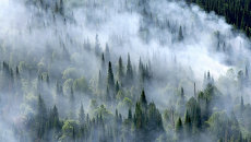 Лесные пожары в Красноярском крае. Архивное фото