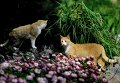 Коты в Никитском ботаническом саду в поселке Никита неподалеку от города Ялта в Крыму