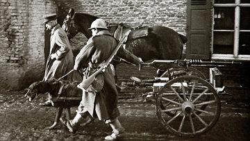 Собака везет пулемет бельгийской армии, Северная Франция