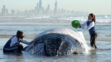 Горбатый кит, архивное фото