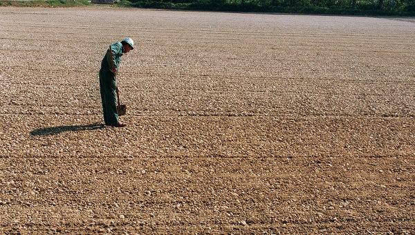 Фермер на поле в Ломбардии. Архивное фото