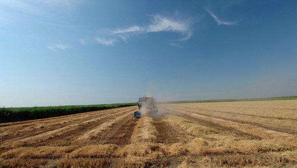 Комбайн, убирающий рис на Кубани