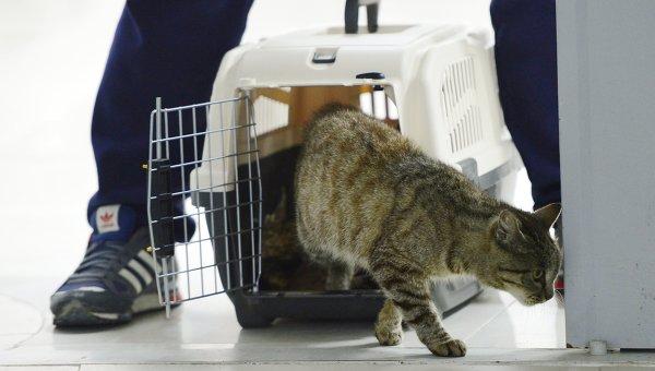 Кошка-воришка, которую сначала приняли за кота, проникла в рыбный павильон аэропорта во Владивостоке