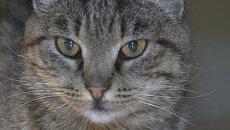 Кошка-воришка Матроска в последний раз прогулялась по аэропорту Владивостока