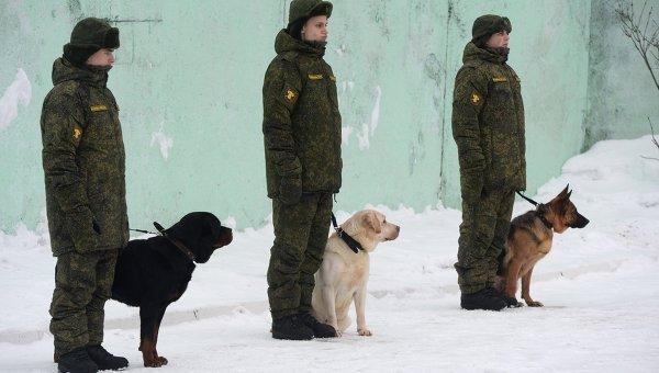 Курсанты со служебными собаками на занятиях по подготовке военных кинологов. Архивное фото