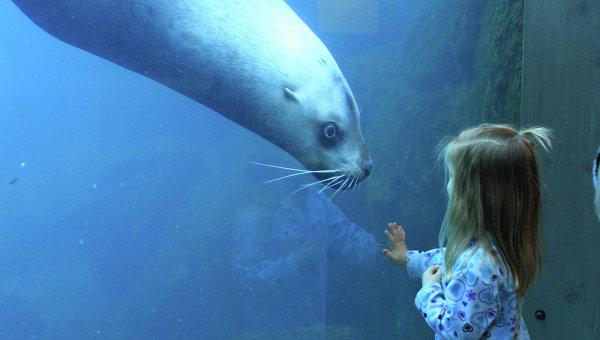 Морской лев. Архивное фото