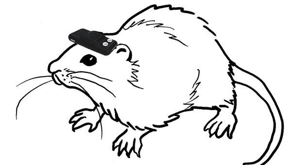 Так художник представил себе крысу с подключенным к ее мозгу цифровым компасом