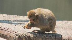 Мороженое для обезьян и медведей, или Как в Риме спасали животных от жары