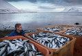 Рыбный промысел в Исландии