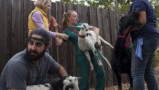 Помощь животным во время лесных пожаров в Калифорнии