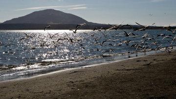 Чайки на берегу Южно-Курильского залива на острове Кунашир. Архивное фото