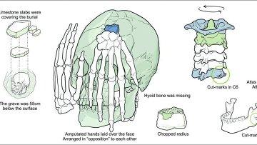 Рисунок черепа и покрывавших его рук
