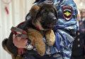 Подарок французским полицейским от российских коллег - щенок по кличке Добрыня