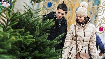 Жители города на одном из елочных базаров в Москве. Архивное фото