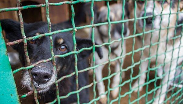 Животные в разрушенном войной Донбассе