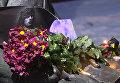 Песни под гитару, свечи и цветы – мир прощается с музыкантом Дэвидом Боуи
