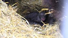Пятерых новорожденных медвежат из зоопарка в Уфе впервые показали публике