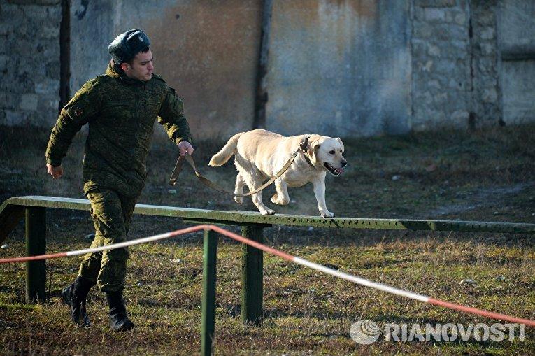 Занятия по взаимодействию военного кинолога и собаки при обнаружении мин и зарядов взрывчатых веществ, а также по преодолению различных препятствий на учебном полигоне Ханкала, расположенного в 7 километрах от Грозного