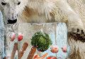 Полярный медведь в зоопарке Токио