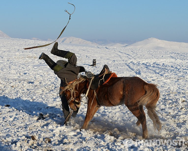 Чабан во время неудачной попытки оседлать необъезженного коня на зимней чабанской стоянке в местечке Чумур-Ой Тес-Хемского кожууна Республики Тыва