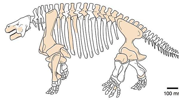 Скелет и челюсти парейазавра, найденного в Китае