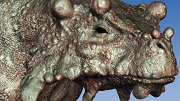 Буностег, один из видов парейазавров