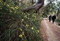 Цветущие кустарники в Никитском ботаническом саду в Крыму