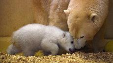 Белый медвежонок со своей мамой по кличке Валеска в зоопарке Бремерхафена, Германия