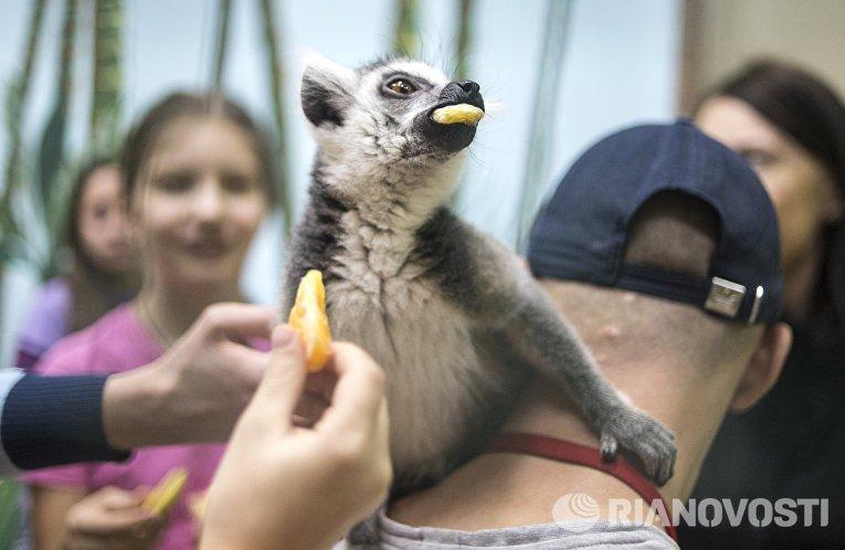 Самый большой контактный зоопарк Зверюшки открылся в Москве