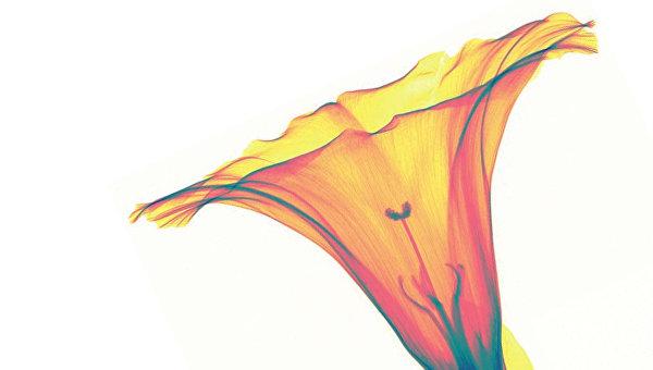 Фотография цветка, полученная детектором Medipix