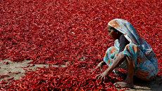 Индианка сушит чили перец на окраине Ахмадабада, Индия