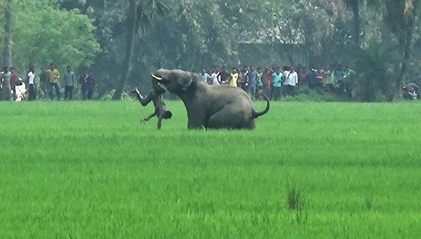 Нападение дикого слона на деревенских жителей в штате Западная Бенгалия на востоке Индии. 20 марта 2016