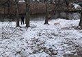 Мужчина гуляет с собакой на берегу Яузы