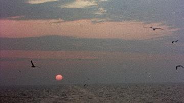 Чайки над Балтийским морем. Архивное фото