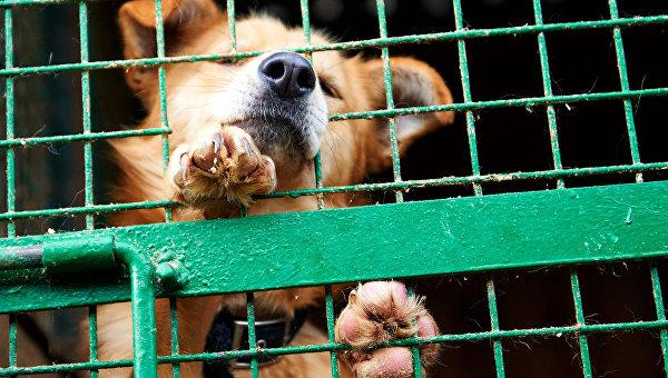 Собака в приюте. Архивное фото