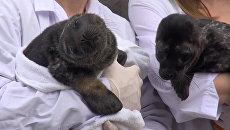 Ластоногие пациенты, или  Как выхаживали спасенных под Петербургом тюленят