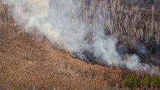 Лесной пожар в Свободненском районе Амурской области. Архивное фото