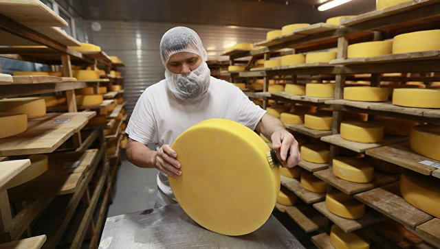 Обмывка и перекладка сыров в хранилище созревания сыра. Архивное фото