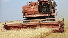 Комбайн на уборочной зерновых в Оренбургской области