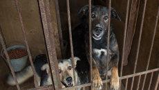 Приют для бездомных животных в Москве