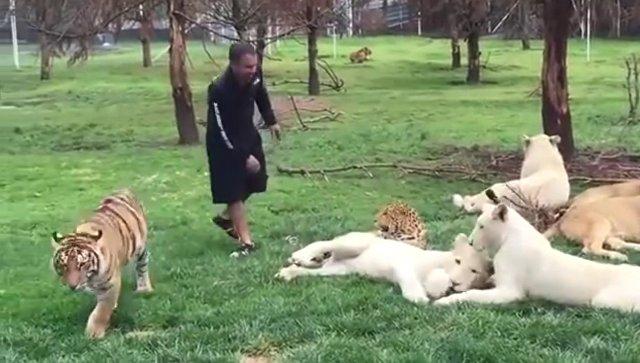 Тигр спас сотрудника зоопарка
