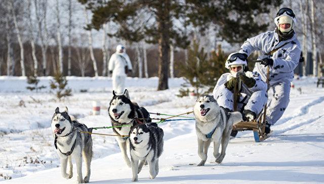 Морпехи ТОФ провели занятие по управлению собачьими упряжками