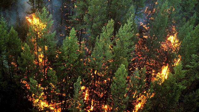 Добычу нефти вСША связали спожарами вСибири