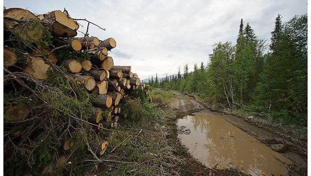 Вырубка леса в Хибинах