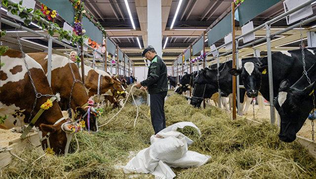 Минсельхоз неограничит вывоз молока изВладимирской области