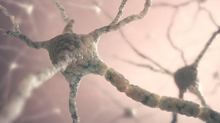 Строение нейрона головного мозга