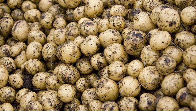 Мексиканские власти введут запрет напоставки картофеля изсоедененных штатов