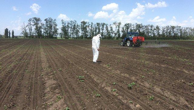 Зерновой союз выступает заразрешение вРФ сева зарегистрированных ГМО-культур