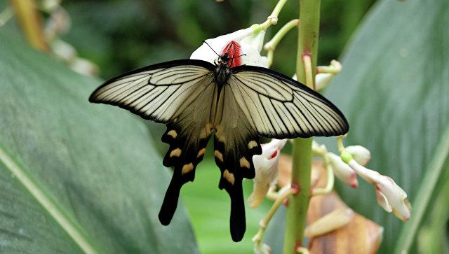 Ученые назвали причины исчезновения бабочек впоследнее время