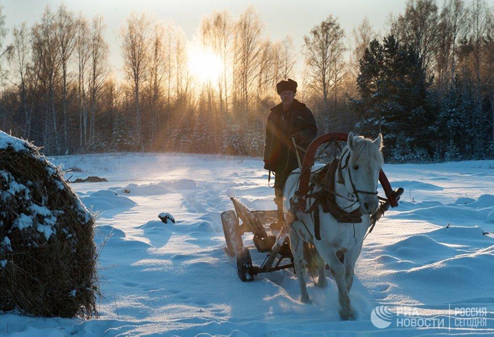 Повозка в селе Березовка Томской области